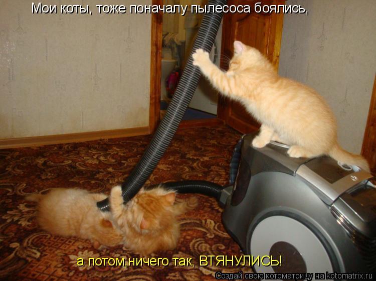 Котоматрица: Мои коты, тоже поначалу пылесоса боялись, а потом,ничего так, ВТЯНУЛИСЬ!