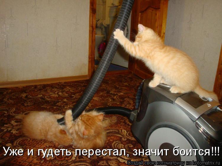 Котоматрица - Уже и гудеть перестал, значит боится!!!
