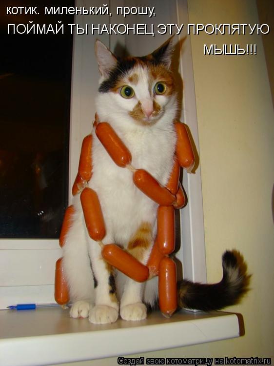 Котоматрица: ПОЙМАЙ ТЫ НАКОНЕЦ ЭТУ ПРОКЛЯТУЮ котик. миленький, прошу, МЫШЬ!!!