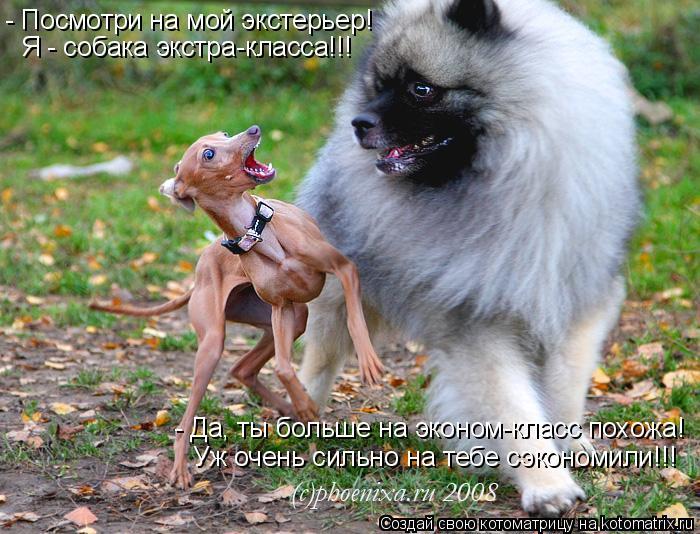 Котоматрица: - Посмотри на мой экстерьер! Я - собака экстра-класса!!! - Да, ты больше на эконом-класс похожа! Уж очень сильно на тебе сэкономили!!!