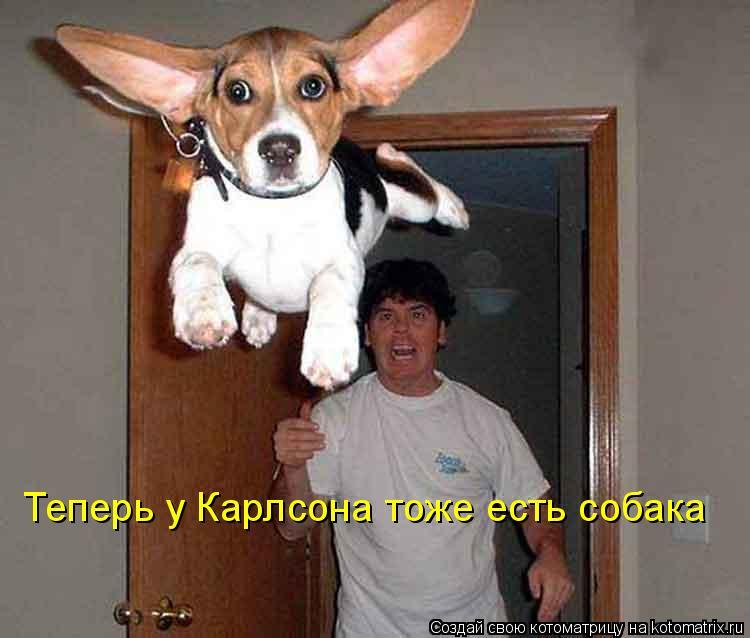 Котоматрица: Теперь у Карлсона тоже есть собака