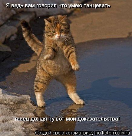 Котоматрица: Я ведь вам говорил что умею танцевать  танец дождя ну вот мои доказательства!