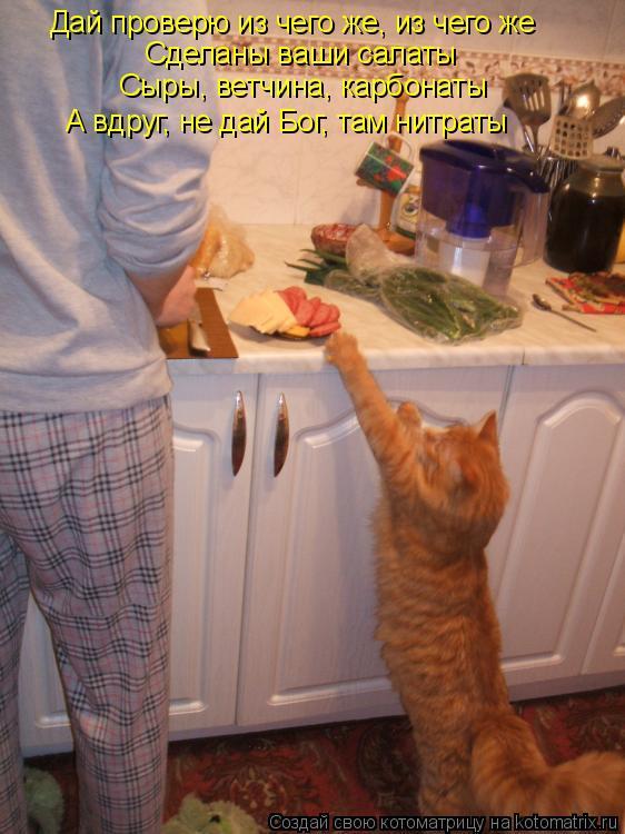 Котоматрица - Дай проверю из чего же, из чего же Сделаны ваши салаты Сыры, ветчина,
