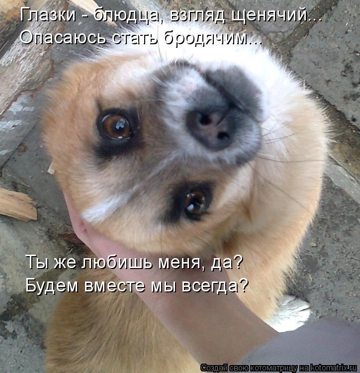 Котоматрица: Глазки - блюдца, взгляд щенячий... Опасаюсь стать бродячим... Ты же любишь меня, да? Будем вместе мы всегда?