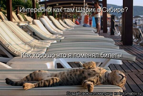 Котоматрица: Интересно как там Шарик в Сибире? Как хорошо что я поменял билеты