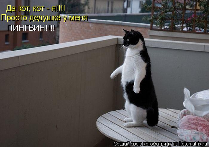 Котоматрица: Да кот, кот - я!!!! Просто дедушка у меня  ПИНГВИН!!!!