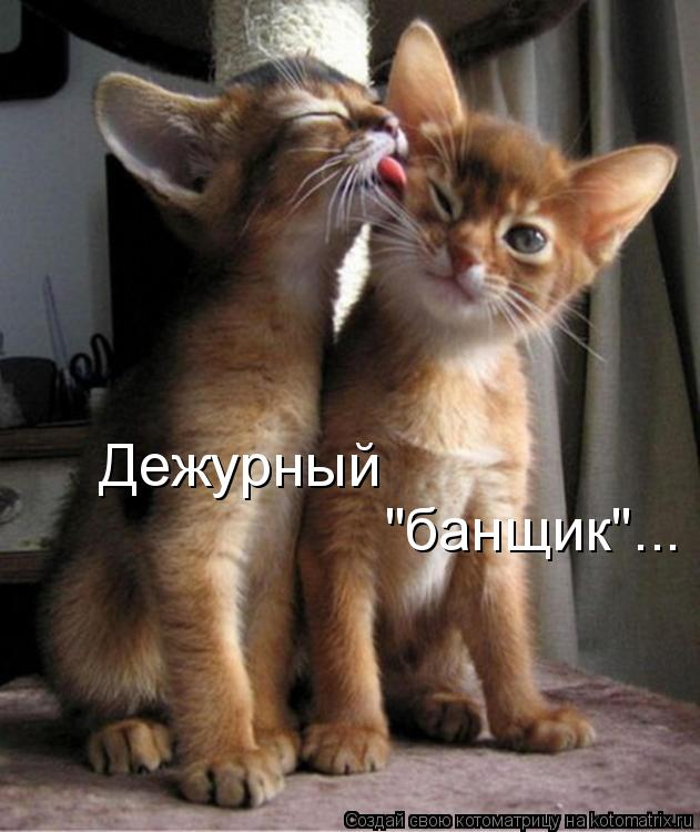 "Котоматрица - Дежурный  ""банщик""..."