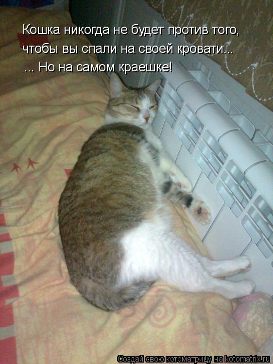 Котоматрица: Кошка никогда не будет против того, Кошка никогда не будет против того, чтобы вы спали на своей кровати... ... Но на самом краешке!