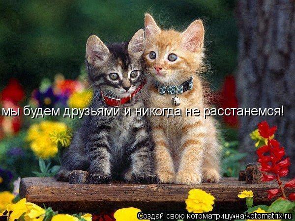 Котоматрица: мы будем друзьями и никогда не расстанемся!