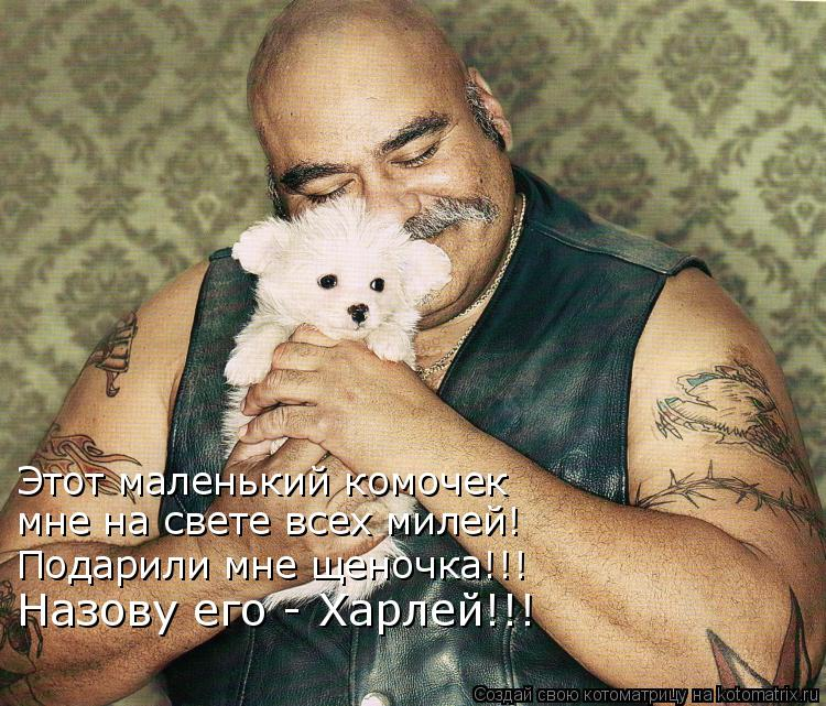 Котоматрица: Этот маленький комочек мне на свете всех милей! Подарили мне щеночка!!! Назову его - Харлей!!!