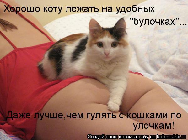 """Котоматрица: Хорошо коту лежать на удобных """"булочках""""... Даже лучше,чем гулять с кошками по улочкам!"""