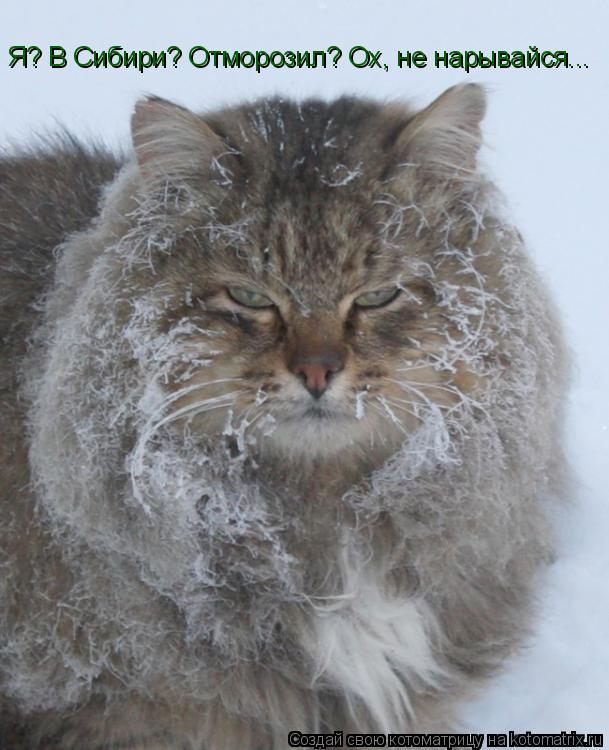 Котоматрица: Я? В Сибири? Отморозил? Ох, не нарывайся...