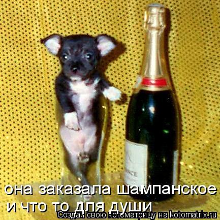 Котоматрица: она заказала шампанское  и что то для души