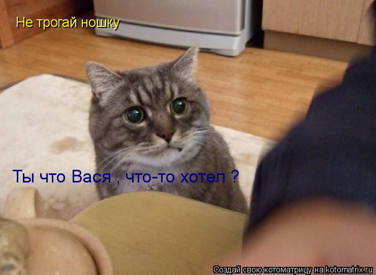 Котоматрица: Не трогай ношку  Ты что Вася , что-то хотел ?