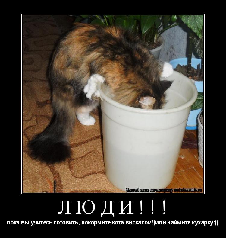 Котоматрица: ЛЮДИ!!! пока вы учитесь готовить, покормите кота вискасом!(или наймите кухарку:))