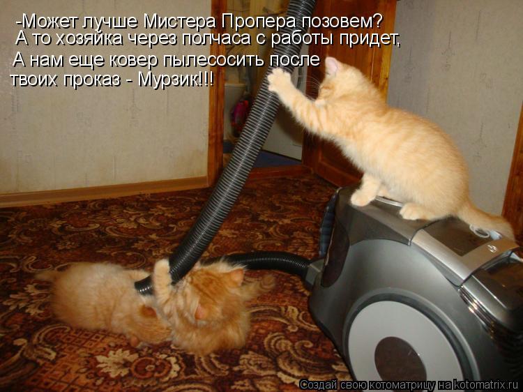Котоматрица: -Может лучше Мистера Пропера позовем? А то хозяйка через полчаса с работы придет, А нам еще ковер пылесосить после  твоих проказ - Мурзик!!!