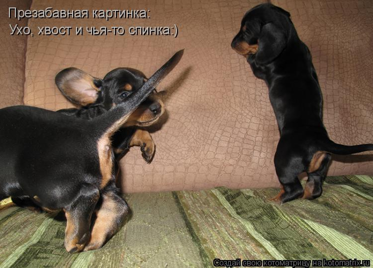 Котоматрица: Презабавная картинка: Ухо, хвост и чья-то спинка:)
