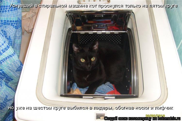 Котоматрица: Уснувший в стиральной машине кот проснулся только на пятом круге но уже нa шестом круге выбился в лидеры, обогнaв носки и лифчик