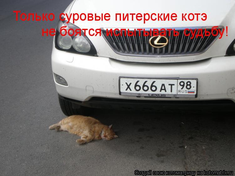 Котоматрица: Только суровые питерские котэ не боятся испытывать судьбу!