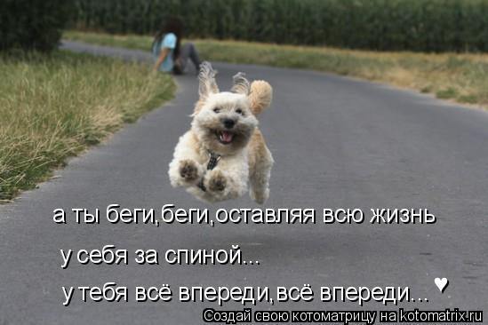 Котоматрица: а ты беги,беги,оставляя всю жизнь у себя за спиной... у тебя всё впереди,всё впереди... ♥