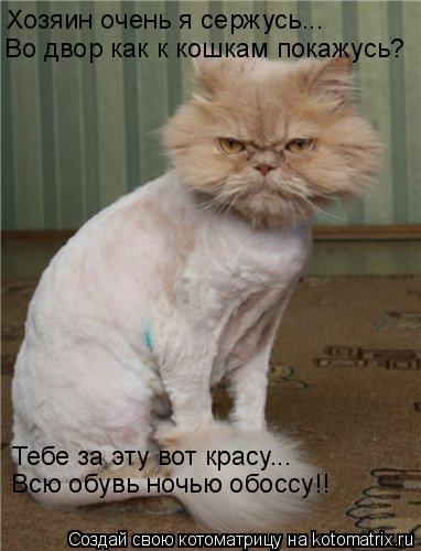 Котоматрица: Хозяин очень я сержусь... Во двор как к кошкам покажусь? Тебе за эту вот красу... Всю обувь ночью обоссу!!
