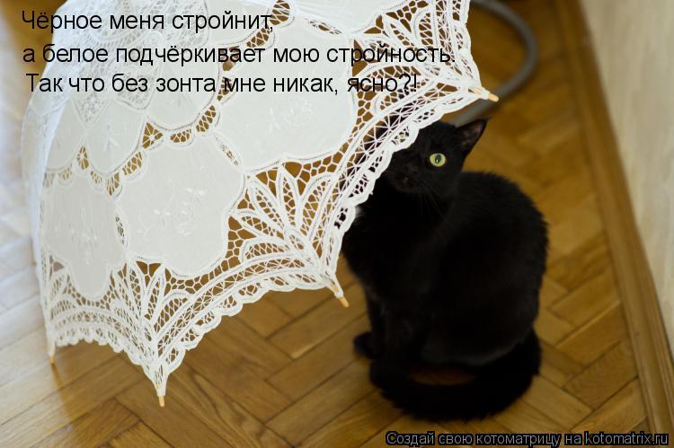 Котоматрица: Чёрное меня стройнит, а белое подчёркивает мою стройность. Так что без зонта мне никак, ясно?!