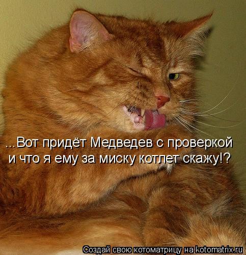 Котоматрица: ...Вот придёт Медведев с проверкой и что я ему за миску котлет скажу!?