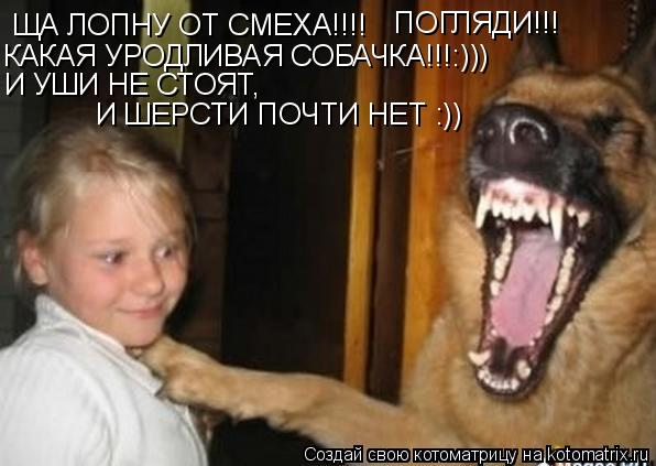 Котоматрица: ЩА ЛОПНУ ОТ СМЕХА!!!!  КАКАЯ УРОДЛИВАЯ СОБАЧКА!!!:))) И УШИ НЕ СТОЯТ,  И ШЕРСТИ ПОЧТИ НЕТ :)) ПОГЛЯДИ!!!