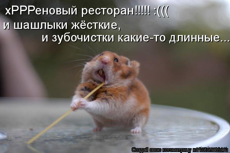 Котоматрица: хРРРеновый ресторан!!!!! :((( и шашлыки жёсткие,  и зубочистки какие-то длинные...