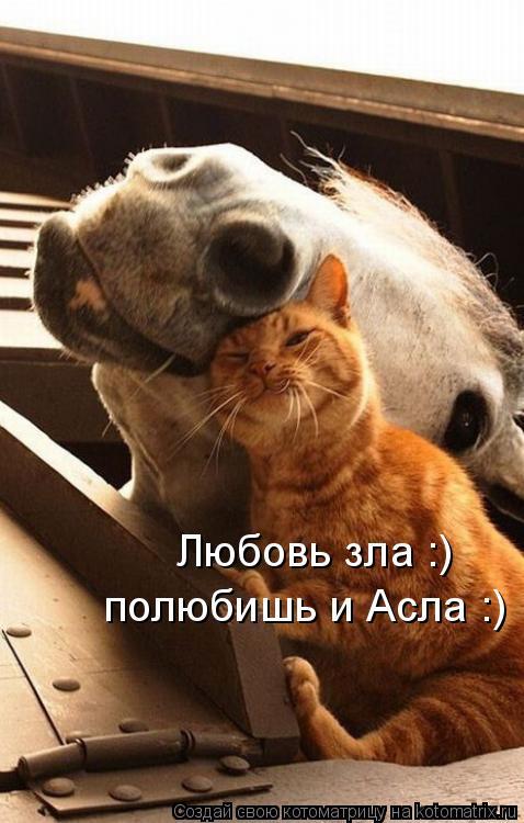 Котоматрица: Любовь зла :)  полюбишь и Асла :)