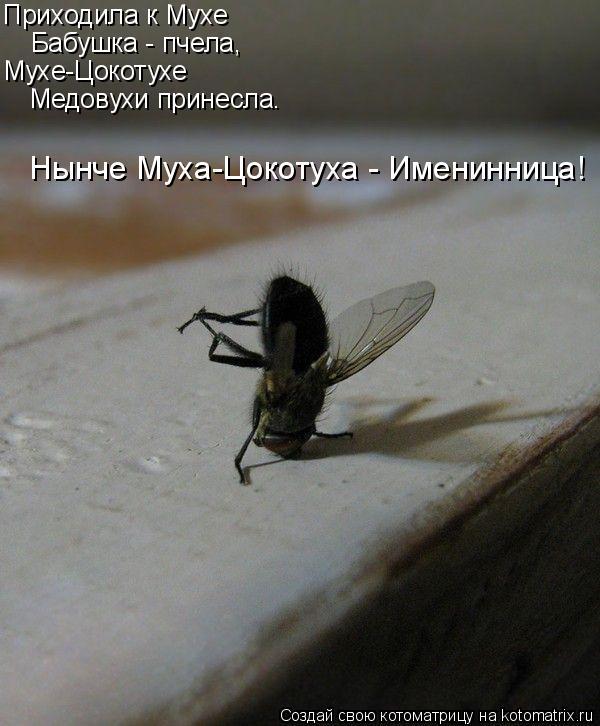 Котоматрица: Приходила к Мухе Бабушка - пчела, Мухе-Цокотухе Медовухи принесла… Нынче Муха-Цокотуха - Именинница!