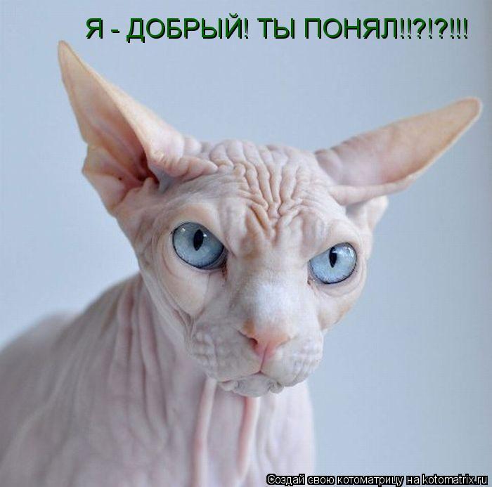 Котоматрица: Я - ДОБРЫЙ! ТЫ ПОНЯЛ!!?!?!!!