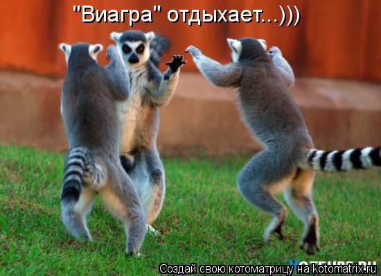 """Котоматрица: """"Виагра"""" отдыхает...)))"""