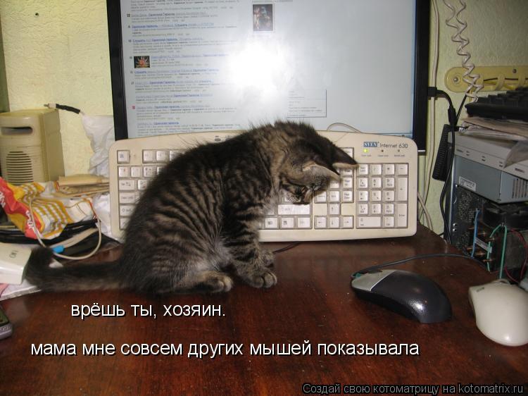 Котоматрица: врёшь ты, хозяин. мама мне совсем других мышей показывала