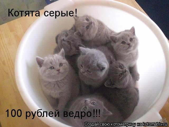 Котоматрица: Котята серые! 100 рублей ведро!!!
