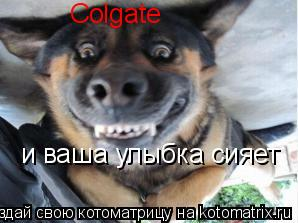 Котоматрица: Colgate и ваша улыбка сияет