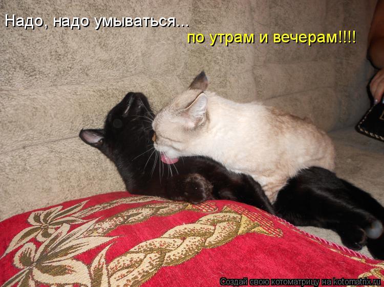 Котоматрица: Надо, надо умываться... по утрам и вечерам!!!!