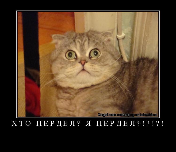 Котоматрица: хто пердел? Я ПЕРДЕЛ?!?!?!