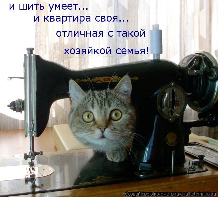 Котоматрица: и шить умеет... и квартира своя... отличная с такой хозяйкой семья!