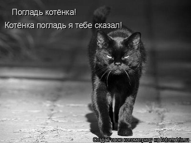 Котоматрица: Погладь котёнка! Котёнка погладь я тебе сказал!