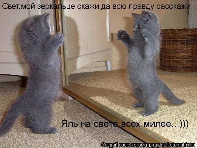Котоматрица: Свет,мой зеркальце скажи,да всю правду расскажи Яль на свете всех милее...)))
