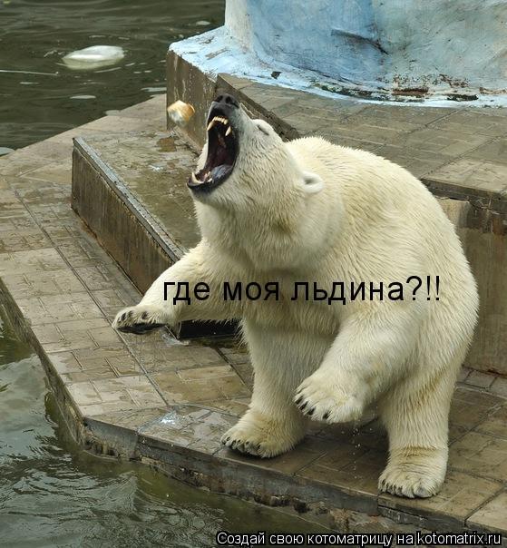 Котоматрица: где моя льдина?!!