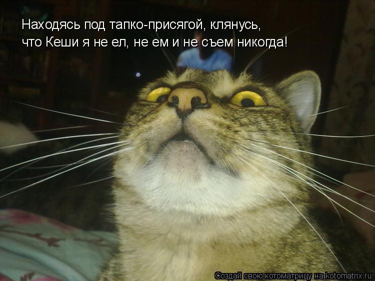 Котоматрица - Находясь под тапко-присягой, клянусь, что Кеши я не ел, не ем и не съе