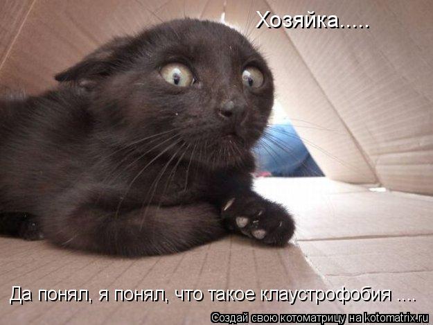 Котоматрица: Хозяйка..... Да понял, я понял, что такое клаустрофобия ....