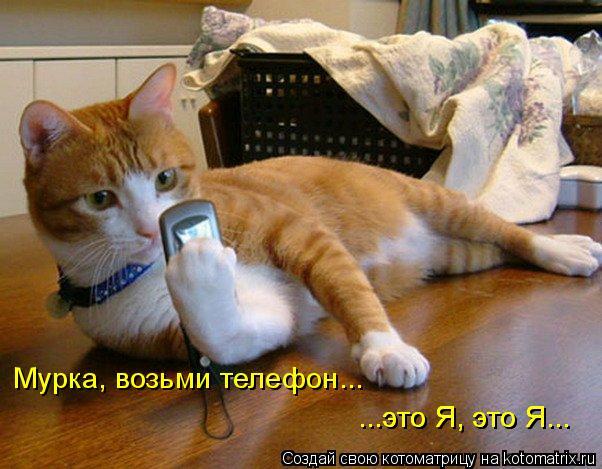 Котоматрица: Мурка, возьми телефон... ...это Я, это Я... ...это Я, это Я...