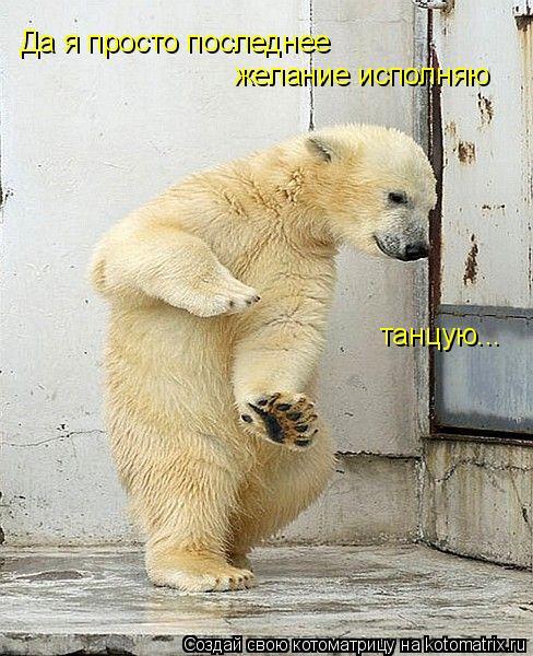 Котоматрица: Да я просто последнее  желание исполняю танцую...