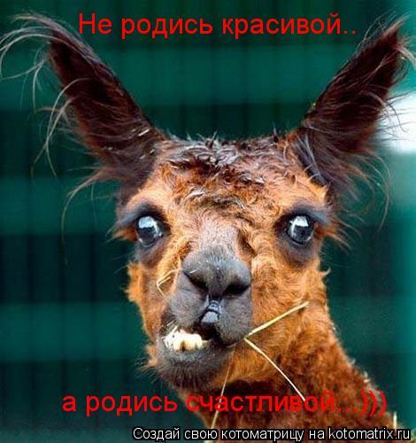 Котоматрица: Не родись красивой.. а родись счастливой...)))