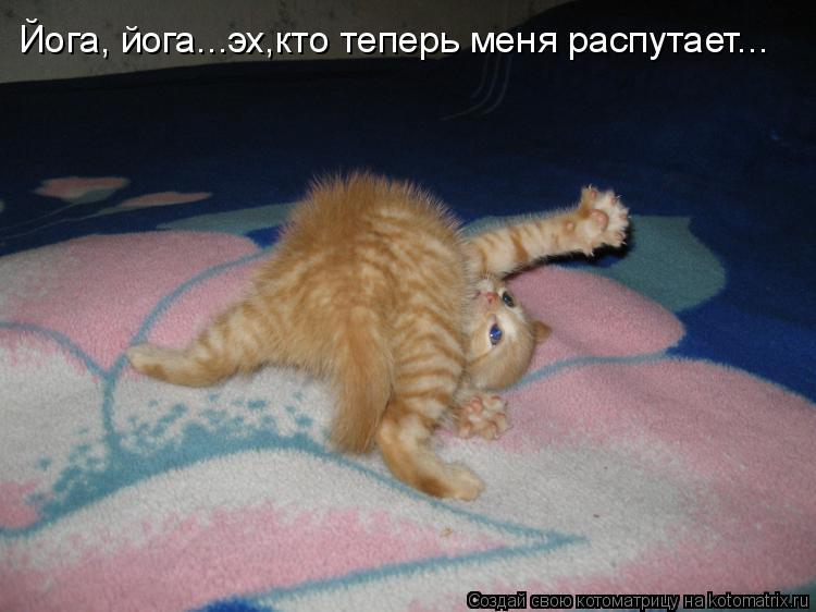 Котоматрица: Йога, йога...эх,кто теперь меня распутает...