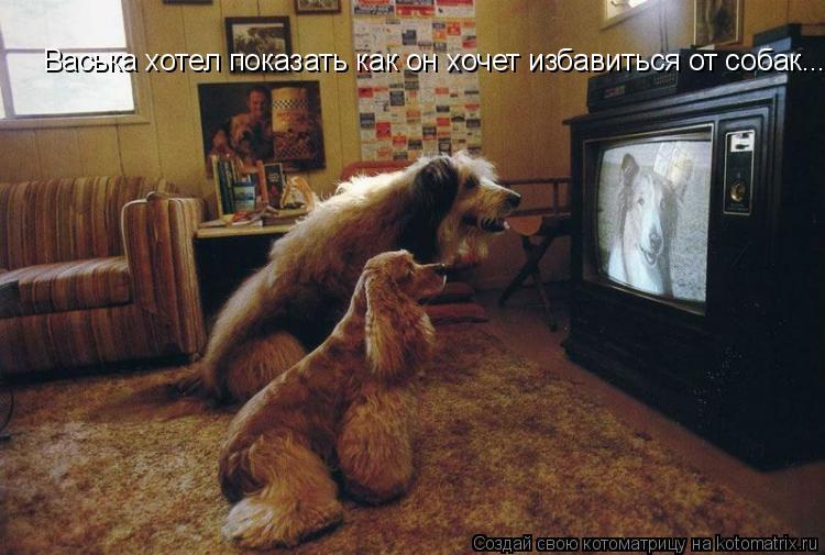 Котоматрица: Васька хотел показать как он хочет избавиться от собак....