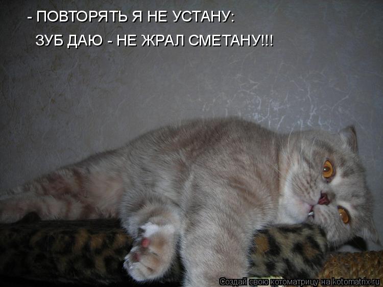 Котоматрица: - ПОВТОРЯТЬ Я НЕ УСТАНУ: ЗУБ ДАЮ - НЕ ЖРАЛ СМЕТАНУ!!!
